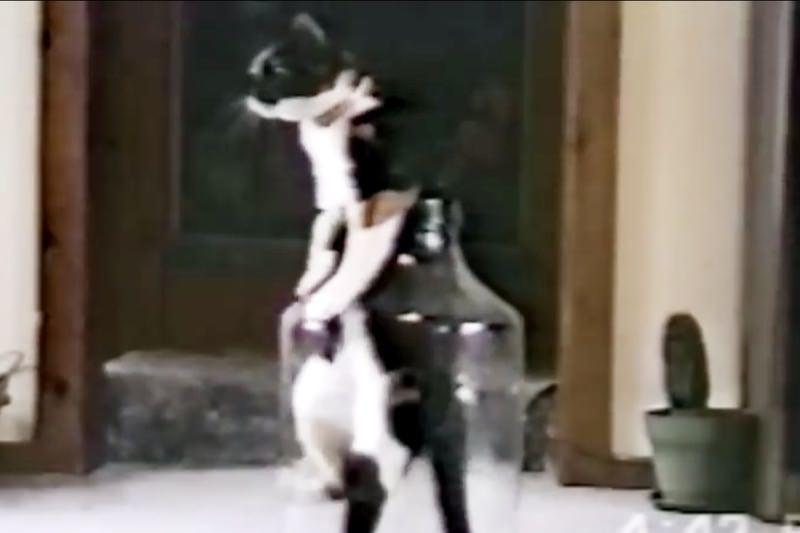 【動画】猫の面白動画集!可愛そうだけど癒されるYouTubeねこ2004