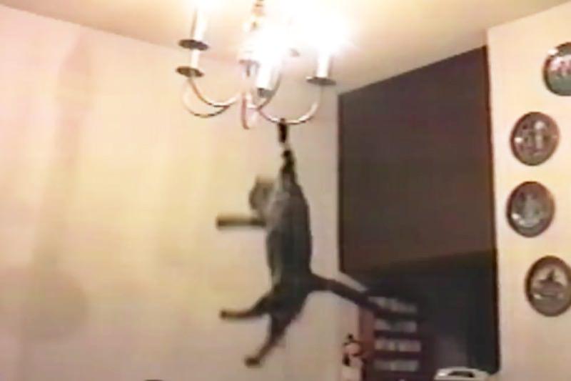 【動画】猫の面白動画集!可愛そうだけど癒されるYouTubeねこ2006