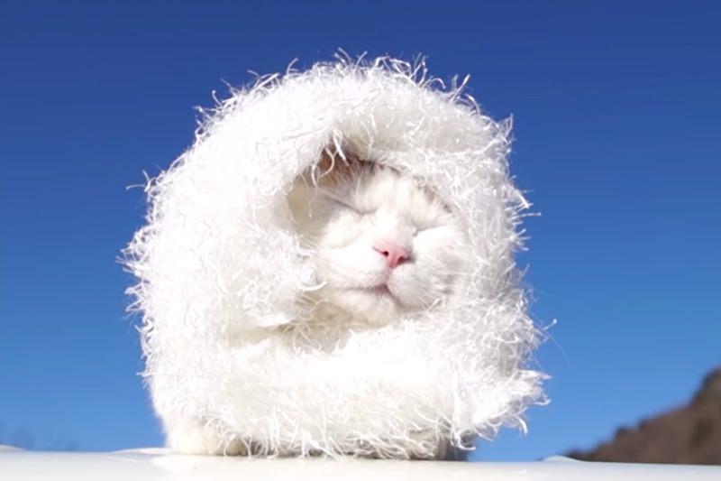 【動画】しろエリマキのかわいい猫03