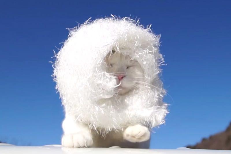 【動画】しろエリマキのかわいい猫05