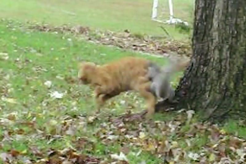 【動画】猫の面白動画集!可愛そうだけど癒されるYouTubeねこ2008