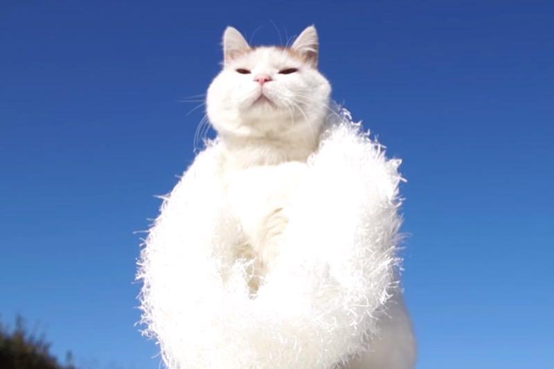 【動画】しろエリマキのかわいい猫07