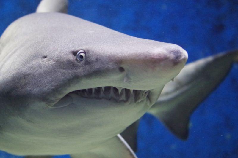 【動画】パニック!おとなしいマナティを凶暴なサメと勘違いする女の子06